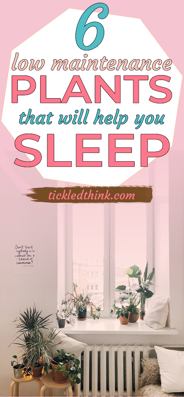 plants that will help you sleep