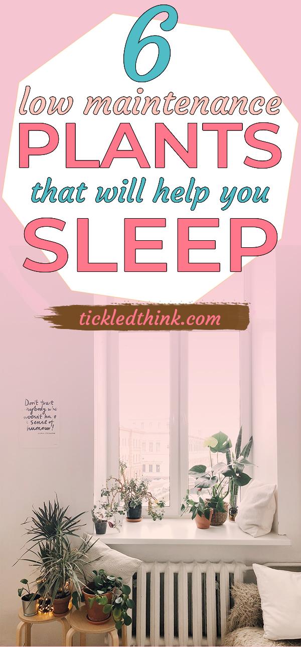 plants that will help you sleep