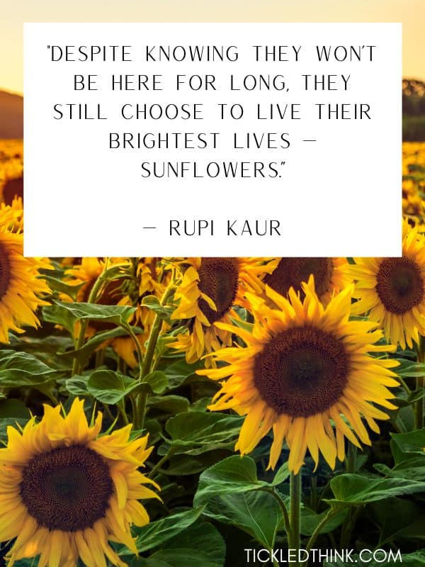 Beautiful sunflower quotes 1