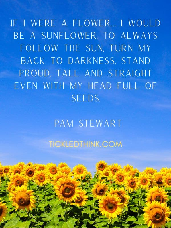 Cute sunflower quotes