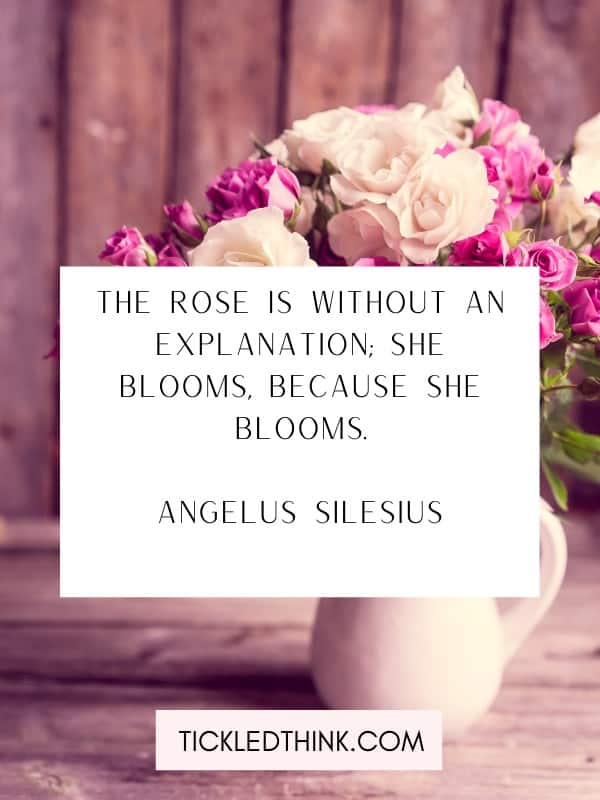 Inspirational rose quotes and quotes about rose