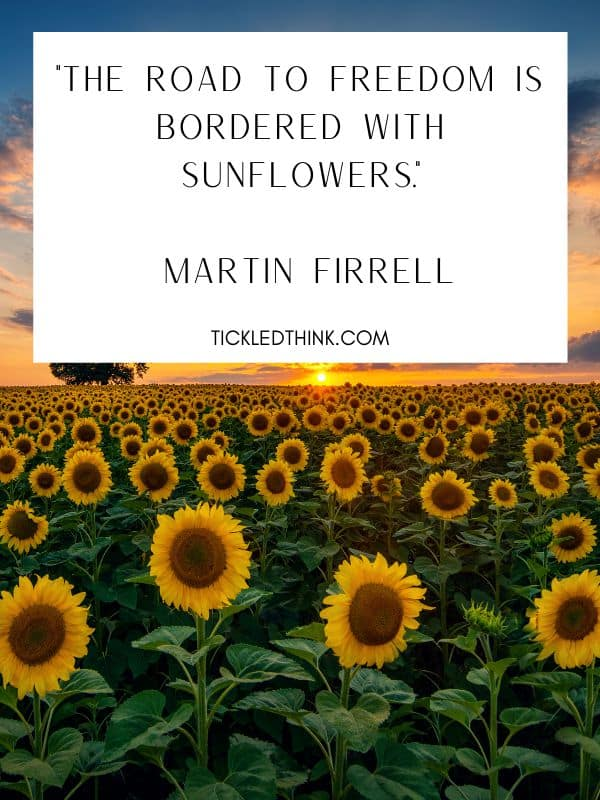 Uplifting sunflower quotes and quotes about sunflower